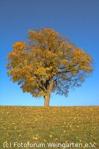 EH Herbst D71 2729-1200