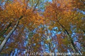 EH Herbst D71 3036-1200