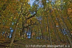 EH Herbst D75 3819-1200