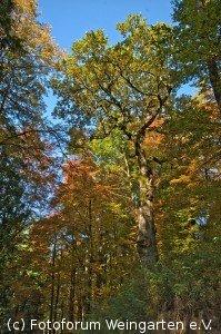 EH Herbst D75 3825-1200