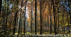 EH Herbst D75 3840-naho-1200