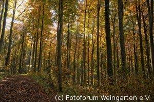 EH Herbst D75 3846-1200