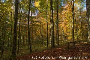 EH Herbst D75 3868-1200