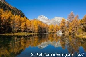 Engadin-Laerchen-2012IMG 5635-1