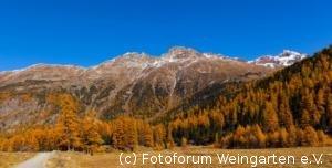 Engadin-Laerchen-2012IMG 5891-1